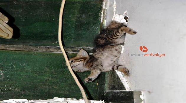 Sıkışan yavru kediyi itfaiye kurtardı