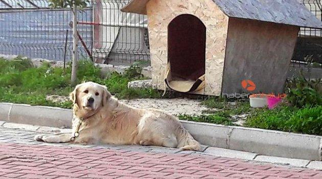 Yine hayvan katliamı: Üç köpek zehirlenerek öldürüldü