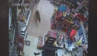 Müşteri beklerken tezgahta çakalı gören marketçi şoka girdi