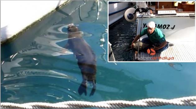 Profesör, anne fokun limana getirdiği yavruyu kurtardı