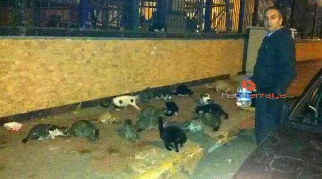 Sokak kedileri için bırakılan mamaları süpürgeyle dağıttı!