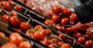 Rusya beş Türk şirketinden daha domates ithalat izni verdi