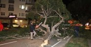 Antalya'da şiddetli rüzgar ağaçları kökünden söktü! | Antalya hava durumu