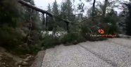 Antalya'da fırtına ağacı yerinden söktü