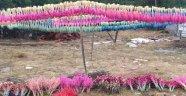 Akseki'de kuru çiçek sektörü yeniden altın çağını yaşamaya başladı