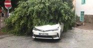 Alanya'da fırtınada ağaçlar devrildi, çatılar uçtu