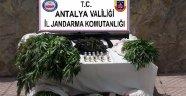 Antalya'da uyuşturucu operasyonları