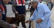 Antalya'da küçükbaş hayvan hırsızları yakalandı