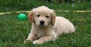 Araştırma: Köpeği olan insanların ölüm riski...