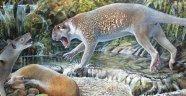 Avustralya'da 18 milyon yıl önceki 'marsupial aslan' türü ortaya çıktı