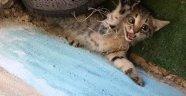 Balık ağına dolanan kedi yavruları kurtarıldı