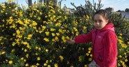 Demre'de çiçekler açtı