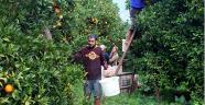 Dolu yağışı Finike portakalını vurdu