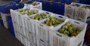 Kaliforniya biberine Rus pazarı darbesi