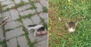 Kediyi, kafasını ve bacaklarını keserek öldürdüler