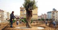 Kepez'de yeşil alan çalışmaları