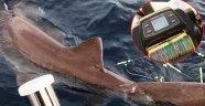 Oltayla 326 kiloluk köpekbalığı yakaladı, korkudan tekneye çekemedi