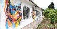 Sokak Hayvanları Rehabilitasyon Merkezi'nin duvarları renklendi
