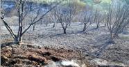 Yangının bilançosu gün ağarınca ortaya çıktı