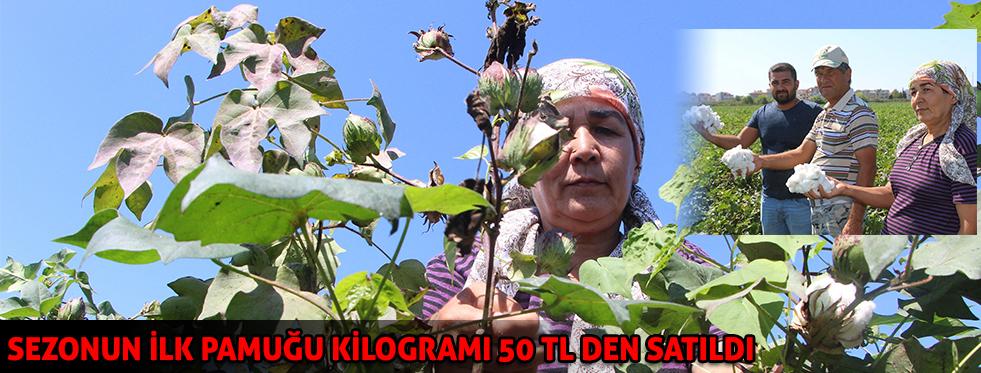 Antalya'da sezonun ilk pamuğu kilogramı 50 liradan satıldı