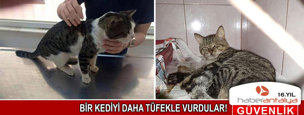 Antalya'da bir kediyi daha tüfekle vurdular!