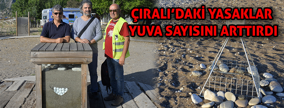 Çıralı'da yasaklar, Caretta Caretta yuva sayısını artırdı