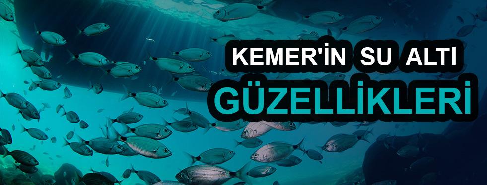 Kemer'in su altı güzellikleri