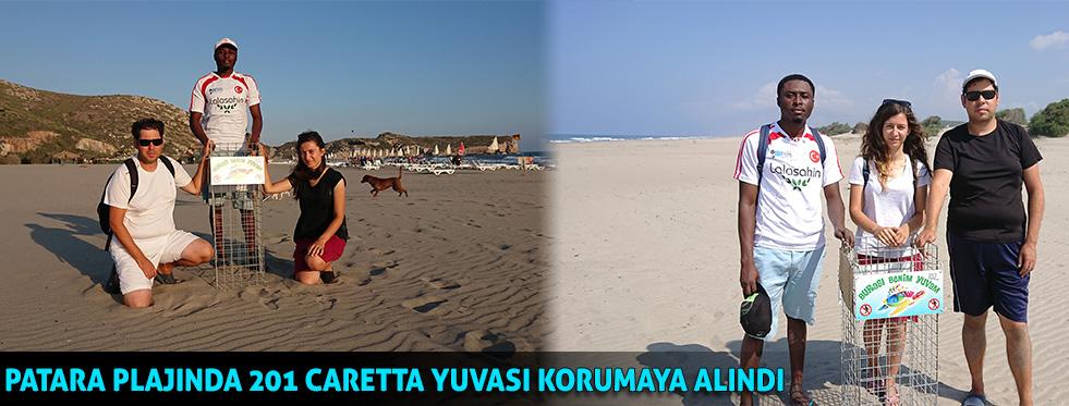 Patara Plajı'nda 201 caretta yuvası korumaya alındı
