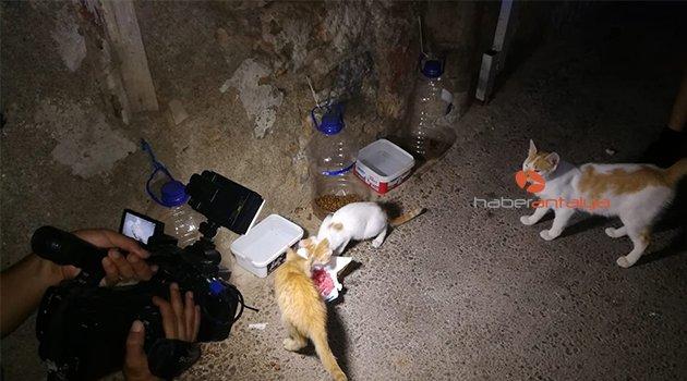 Uçan tekme 2 minik kedinin hayatını kurtardı